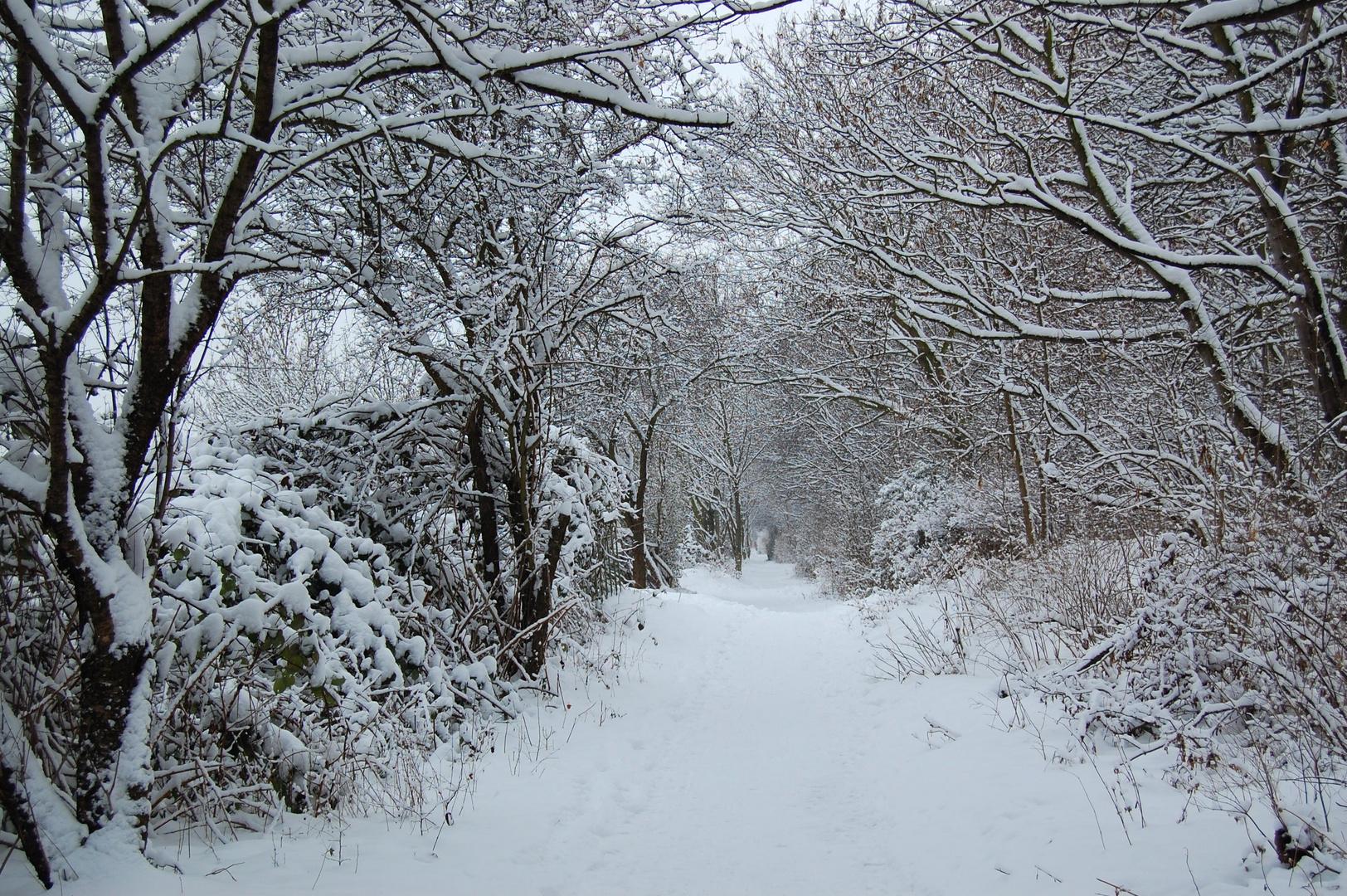 Winter am Kulki 1