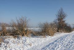 Winter am Moossee