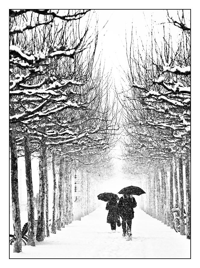 Winter am Rhein