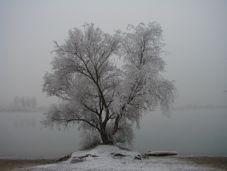 Winter am See 2