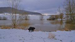 Winter am See, 28.2.20 (invierno en el lago, 28.2.20)