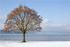 Winter am See bei minus 14°C
