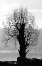 Winter am See j
