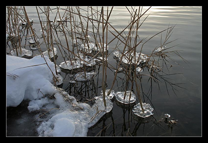 Winter am Tankumsee