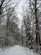 Winter am Tegler See