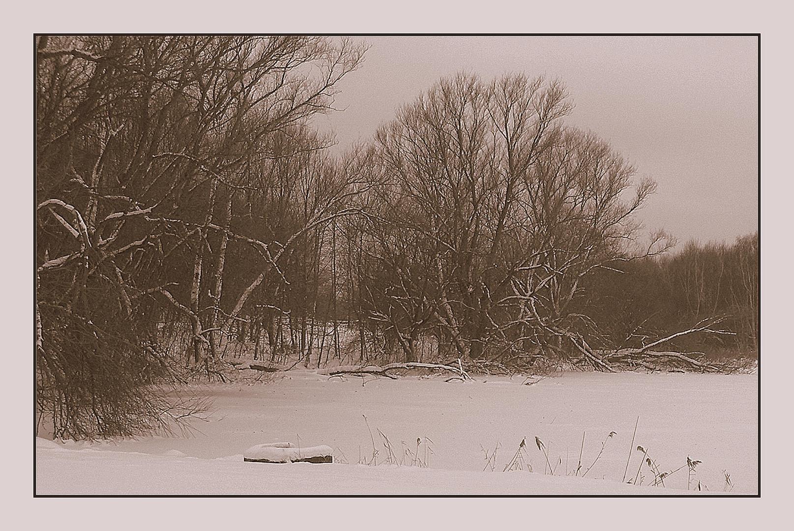 Winter am Teich