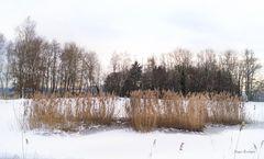 Winter am Thimosweiher