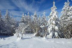 Winter am Vue-des-Alpes