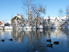 Winter an der Argen...