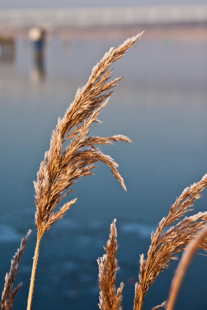 Winter an der Holzhalbinsel