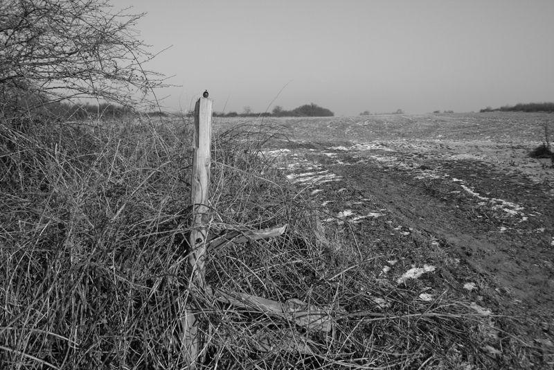 Winter auf dem Feld