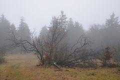 Winter auf dem Feldberg 2