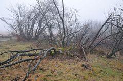 Winter auf dem Feldberg 3