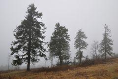 Winter auf dem Großen Feldberg 1