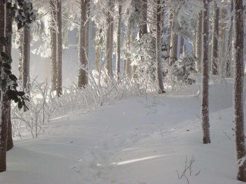 Winter auf den Albis