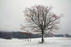 Winter auf der Schwäbischenalb