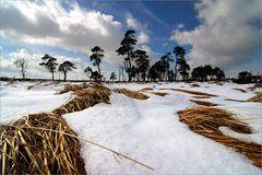 Winter auf Noir Flohay