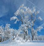 Winter aus der Froschperspektive