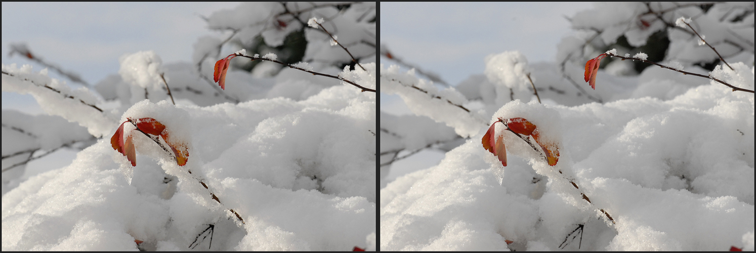 _ Winter _