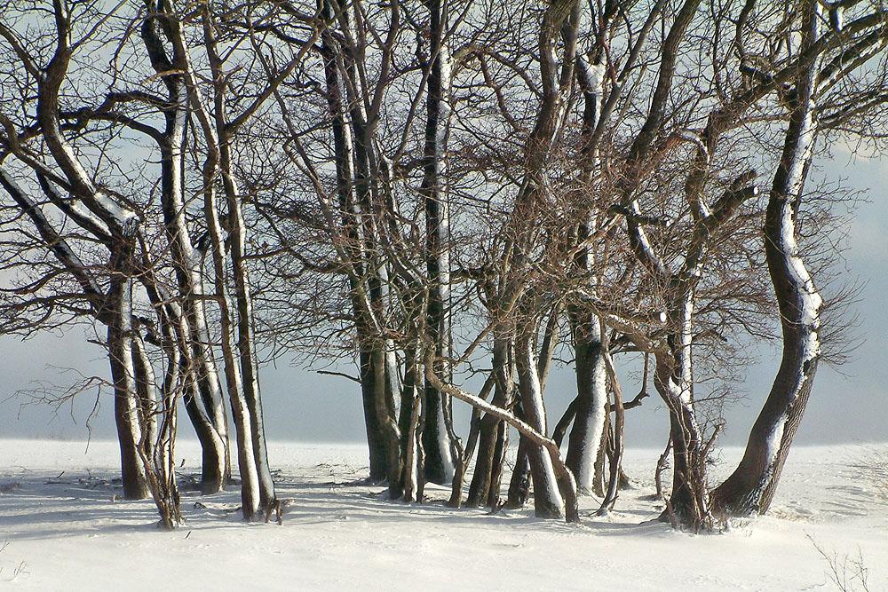 winter b ume winter tr ume 1 foto bild deutschland europe nordrhein westfalen bilder. Black Bedroom Furniture Sets. Home Design Ideas
