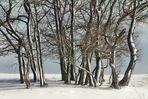 """""""Winter-Bäume - Winter-Träume 1"""""""