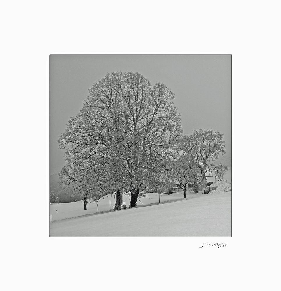 winter baum hotzenwald rahmen sw