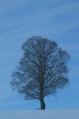 Winter Baum ohne Blötter