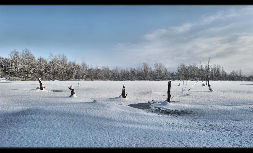 Winter Beauty II