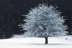Winter bei Grainau