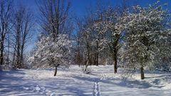 Winter bei Jena