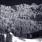 Winter-Bergwald