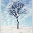 Winter bis in die Spitzen