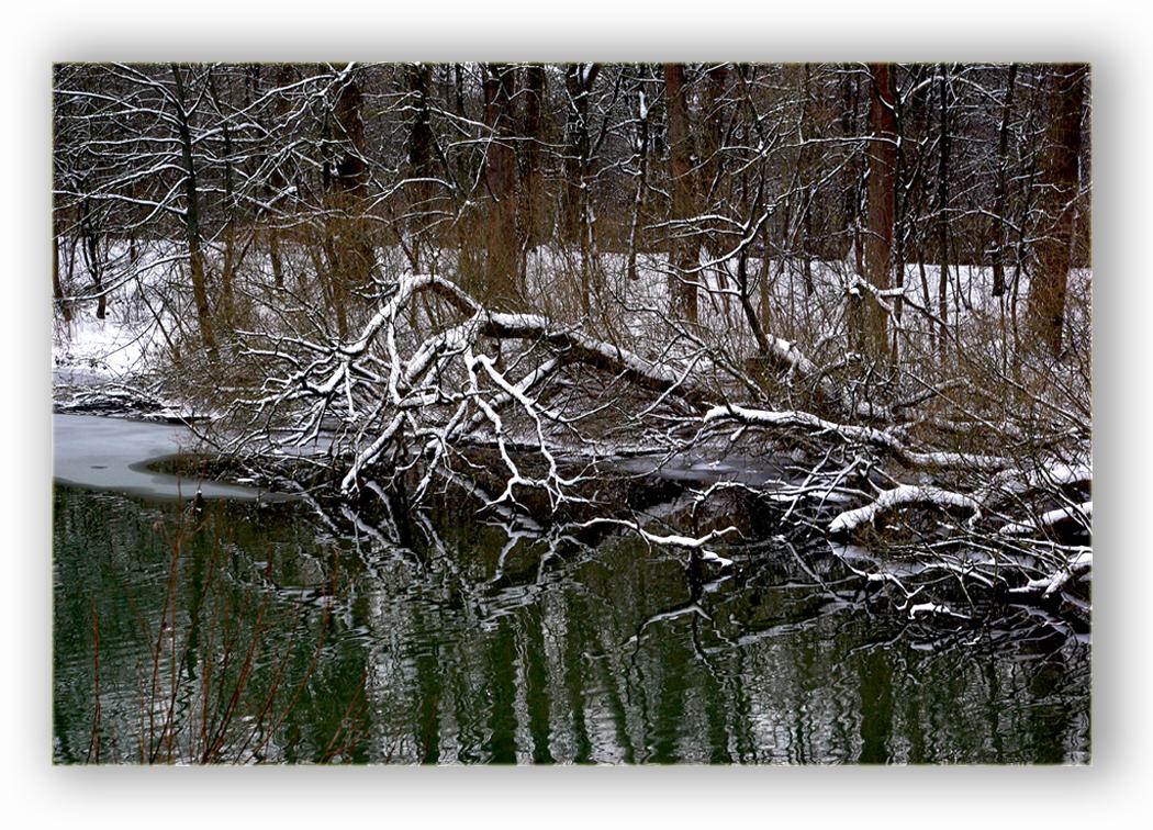 Winter bizarr am alten Neckar