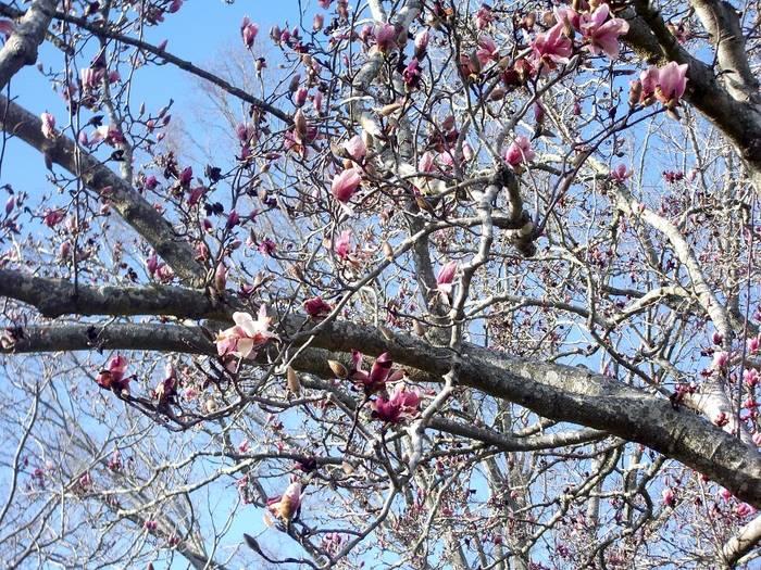 Winter Bloom