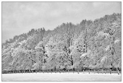 Winter-Dreams #2 hoping for….