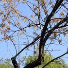 winter dry tree