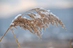 Winter - Farben..-1-