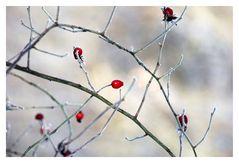 Winter Farben 4