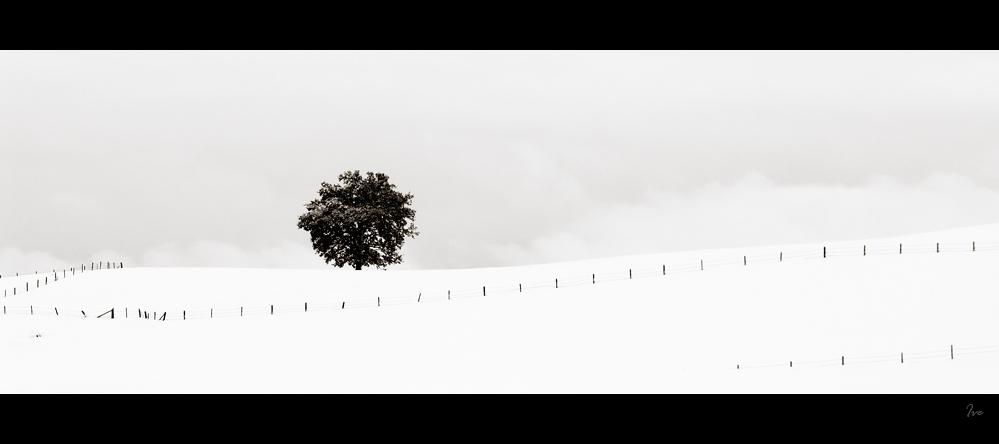 Winter FineArt #11