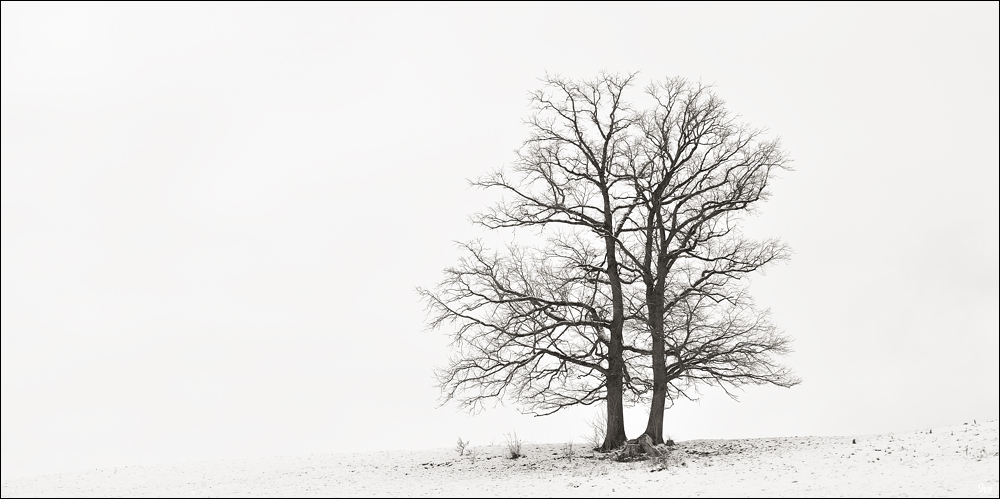 Winter FineArt #14