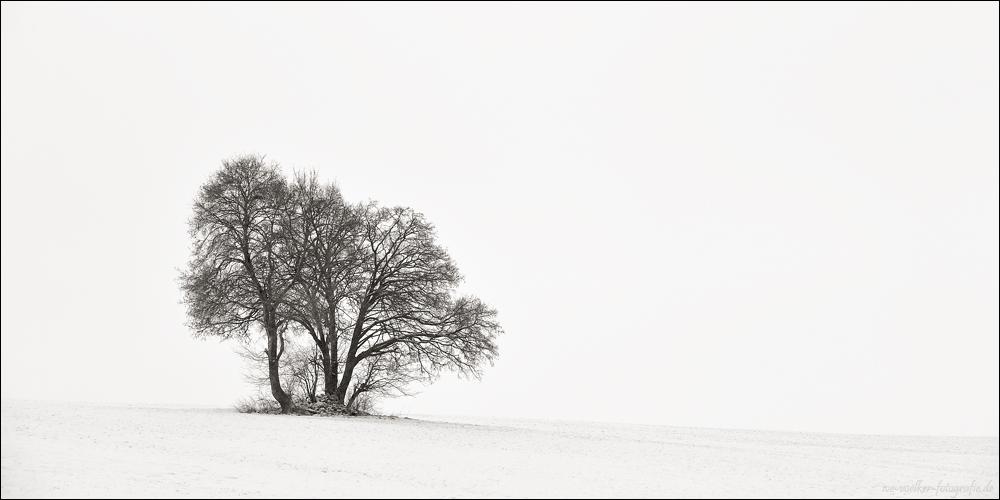 Winter FineArt #19