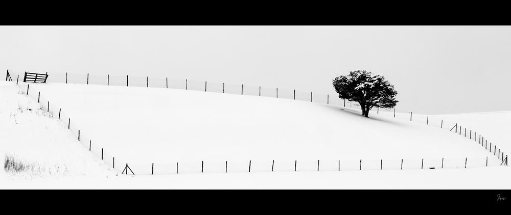 Winter FineArt #4
