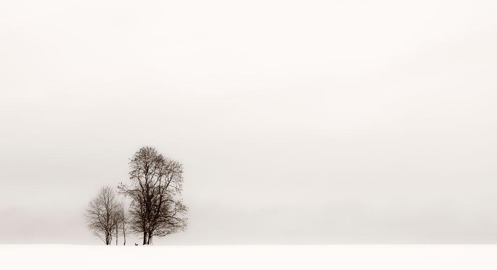 Winter FineArt