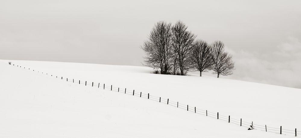 Winter FineArt #6