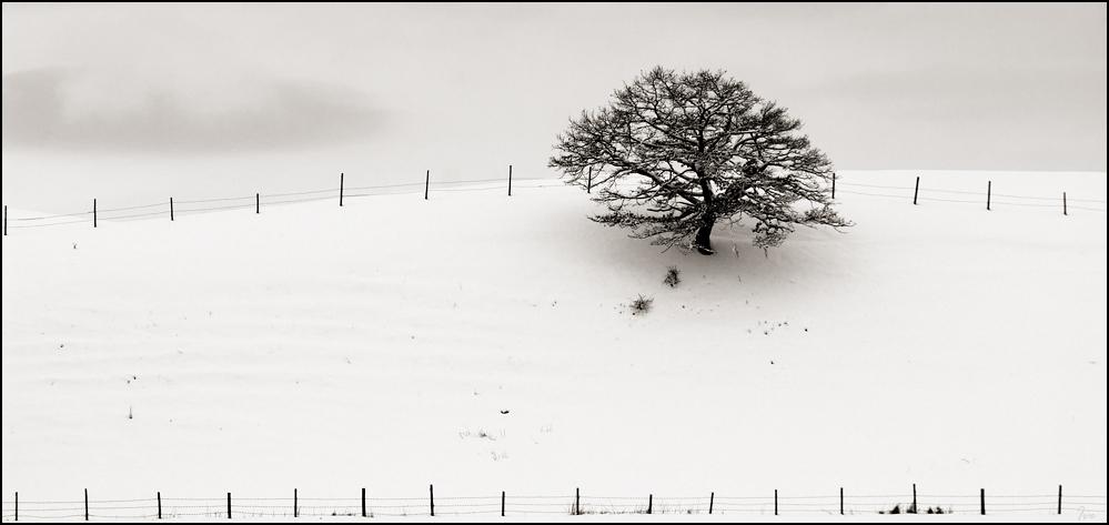Winter FineArt #9