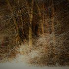 Winter Fotos aus der Natur 1