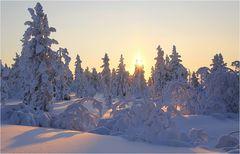 Winter ganz oben