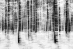 Winter-Geisterwald
