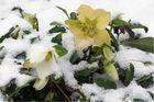 winter-hart