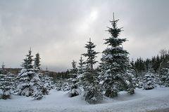 Winter im Alenberger Forst in ca. 800 m Höhe bei -5 Grad